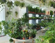 Indoor Plants, Your Natural Air Purifiers