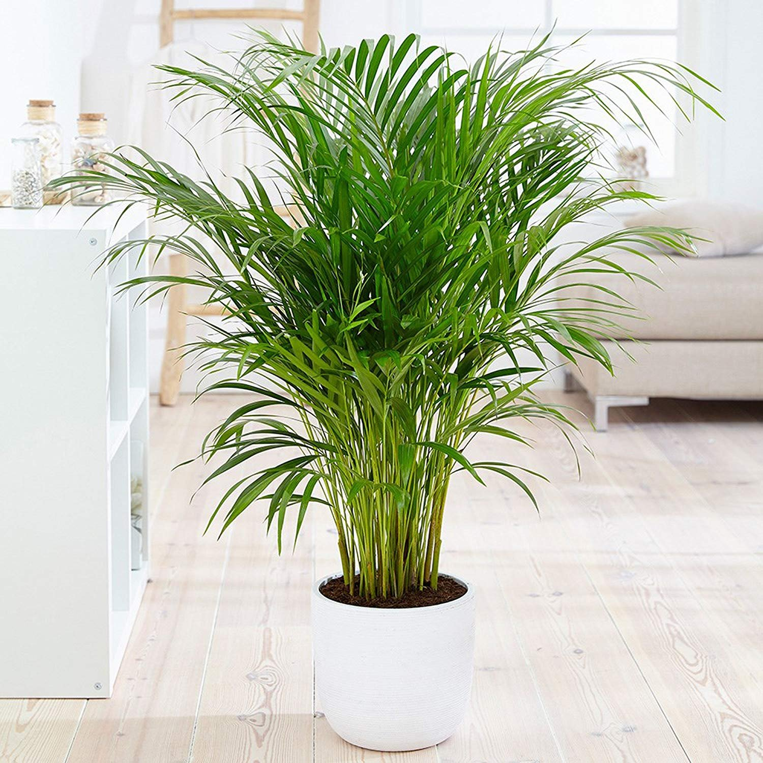 A must have indoor plant